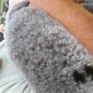 Gray Alpaca Yarn – Peepers