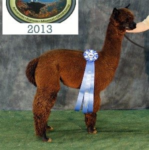 Sponsor an Alpaca – Shadow