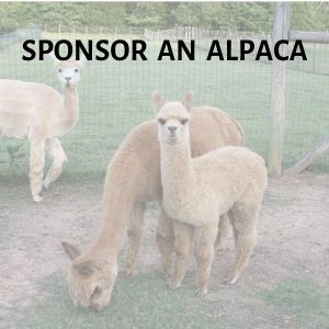 Sponsor an Alpaca