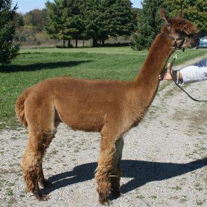 Brown DK Alpaca Yarn