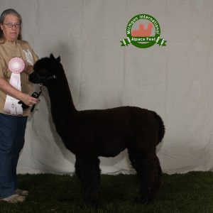 Jets Black Alpaca Roving