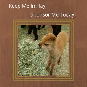 Sponsor a Monthly Mystery Alpaca