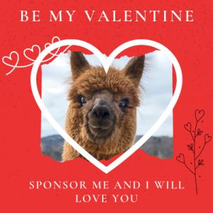 Sponsor a Monthly Alpaca